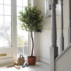 Contemporary Bay Tree The Fragrans Variety This Artificial Looks Amazing And Very Realistic