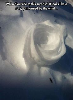 From Jack Frost <3 asking you out