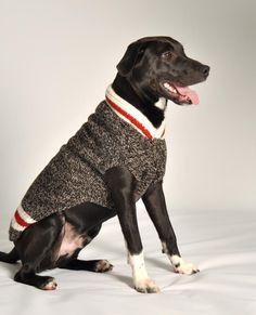 Large pajams for Dog