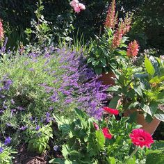 Beautifully mixed potted annuals. Click link in my bio to get my FREE Planting Design Guide with professional tips. Plant Design, Amazing Flowers, Planting, Landscape, Link, Instagram Posts, Free, Beauty, Nursery Trees