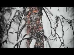 Dude... you have GOT to watch this video. Beautifully shot, great music, great photography. Extreme skiing through a buring forest. With a great, uplifting message. Sigh...