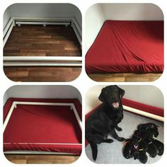 Pvc whelping box More Dog Whelping Box, Whelping Puppies, Puppy Litter, Puppy Kennel, Welping Box, Puppy Room, Puppy Crate, Dog Yard, Pet Hotel