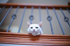 #cat #cute #sweet