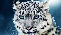 Resultado de imagen para nombres de animales en peligro de extincion