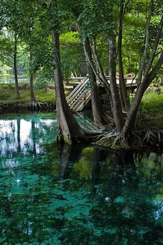 - The 5 Best Swimming Holes In Florida Will Make Your Summer Epic Florida Springs, Florida Usa, Natural Springs In Florida, Places In Florida, Visit Florida, Florida Living, Florida Vacation, Florida Travel, South Florida
