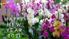 If you are confused about how to celebrate this new year 2021 in a perfect way and looking for new year party decoration ideas then this article has all the best ways of new year celebration described in it.Get to know how to celebrate your home for new year's eve and which flowers are the best for the decoration. Click to know. Blogger Blogs, Orquideas Cymbidium, Residential Landscaping, Spring Air, What Is Work, Professional Landscaping, Salud Natural, Garden Centre, First Day Of Spring
