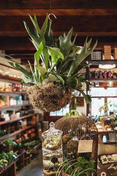 Mercantile - Terrarium Bar and More - Pistils Nursery