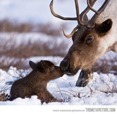 Pals of Rudolph the Reindeer, perhaps?
