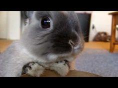 The Bunnies 2010  (YouTube)