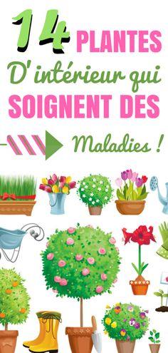 14 PLANTES D'INTÉRIEUR QUI SOIGNENT DES MALADIES