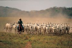 Los Llanos, Colombia - The great plains of Eastern Colombia, home of our…