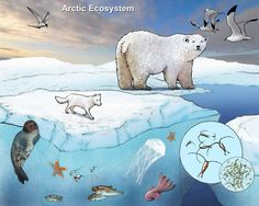Download and print your favorite marine ecosystem illustrations.