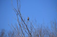 Enjoy this picture collection of creatures with wings. Cooper's Hawk, Black Capped Chickadee, Picture Collection, Pigeon, Wildlife, Wings, Creatures, Bird, Nature