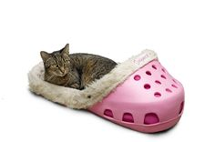 Sasquatch!® Pet Bed - Sasquatch!® Pet Beds