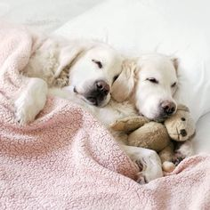 Golden Retriever Puppies - Tap the pin for the most adorable pawtastic fur baby apparel! You'll love the dog clothes and cat clothes! <3
