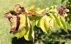 Lus på trær i hagen er vanligere enn du tror, men med noen smarte grep kan du både forebygge og bli kvitt skadedyrene Foto: Yvonne Ringnes Nilsen