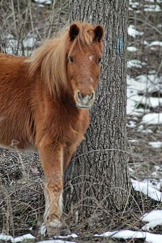Pony,someday!!!!!