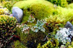 Is Hydroponic Gardening Organic Moss Garden, Garden Plants, Hydroponic Gardening, Organic Gardening, Photographie Macro Nature, Moss Plant, Mushroom Fungi, Neem Oil, Botany