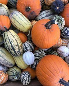 L'automne c'est la saison des couleurs mais aussi des courges! Photo par @lafabriquecrepue Suivez #weekendinsoupconne pour découvrir d'autres photos d'une escapade automnale entre blogueurs dans #Lanaudiere. Escapade, Pumpkin, Vegetables, Instagram Posts, Photos, Food, Gourds, Places, Colors