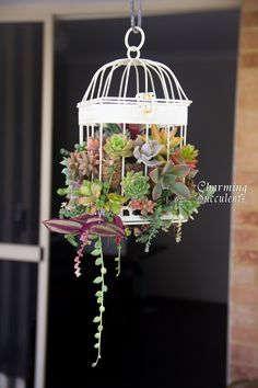 Succulents in birdcage or a vintage hanging scale for the corner of the kitchen/dining area.
