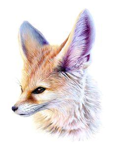jbatesart:  Fennec Fox! Acrylic on paper, 11x17in. The signed original is for sale. Message me for details!© JBatesArt 2015