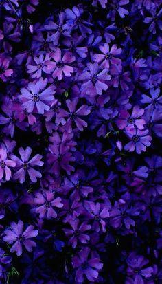 Wallpaper iphone purple beauty phone backgrounds Ideas for 2019 Purple Flowers Wallpaper, Flower Phone Wallpaper, Colorful Wallpaper, Iphone Wallpaper, Purple Flower Background, Dark Purple Flowers, Pretty Flowers, Flower Backgrounds, Phone Backgrounds