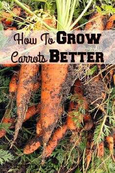 Thinking of trying to grow your own carrots? Check out my tips on How To Grow Carrots Better! http://reusegrowenjoy.com/how-to-grow-carrots-better/