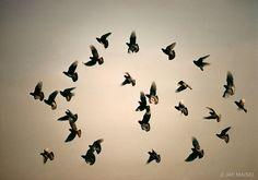 Flock of Birds, Jay Maisel