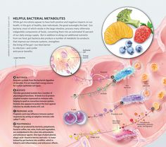 Aw, Helpful Bacterial Metabolites #infographic