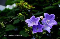 가벼운 사진한장... :: 찍어왔던 꽃사진 모음