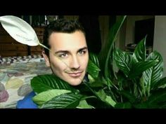How To Make Peace lily blossom Blooming flowers to open faster lirios vessel gay vlog fertilizer Vlog, Peace Lily, Youtube, Blooming Flowers, Plant Leaves, How To Make, White Lilies, Giving Flowers, Potted Garden