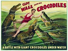 Captain Wall & his Crocodiles 1920s Vintage Circus Sideshow Posters & Prints