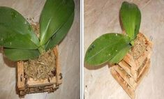 Solution for Rotting Orchid Roots - So Crafty Wooden Basket, Bamboo Basket, Orchid Roots, Plastic Flower Pots, Bonsai, Pesto, Orchids, Plant Leaves, Bloom