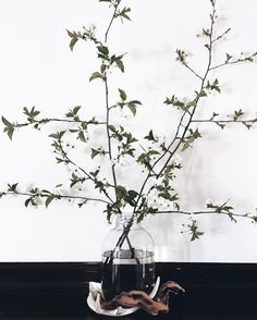 Simple branch decor.  Also what type of tree is this? #therookesnest