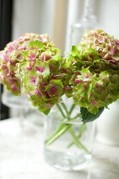 magical coral pink hydrangea • via design*sponge
