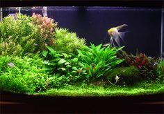 My First Planted Aquarium Aquascape