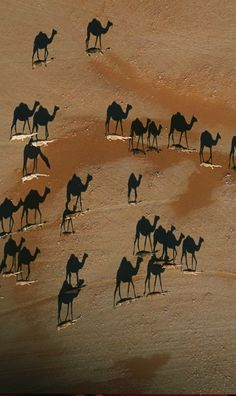 The dark camels are actually shadows. This was taken at sunset by National Geographic photographer George Steinmetz. The white areas at the feet of the shadows are the actual camels Shadow Photography, Aerial Photography, Amazing Photography, Art Photography, Camelus, Image Nature, Photo Portrait, Mundo Animal, Light And Shadow