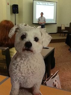 Read about my adventures at BlogPaws 2013