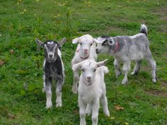 Petting Farms :)