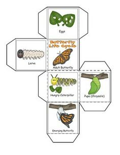 THE LIFE OF A BUTTERFLY ( LEARNING CUBE, ROLL, GRAPH AND COUNT) - TeachersPayTeachers.com Learning cube comes in color or black and white versions.