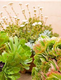 Jardín de cactus y suculentas - Guia de jardin. Aprende a cuidar tu jardín.
