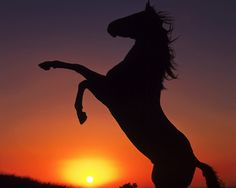 Silhouette of a horse rearing Pretty Horses, Beautiful Horses, Animals Beautiful, Horse Wallpaper, Sunset Wallpaper, Horse Rearing, Horse Silhouette, Sunset Silhouette, Horse Pictures
