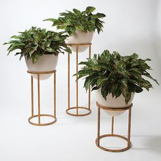 Not only do these stands beautifully display house plants, the Wise Egg Planters are organic in their own right.  A rustic iron stand supports the egg shaped holder, crafted from bio-degradable stone composite - no artificial materials here!    An antique gold leaf finish enhances its natural appeal.  Not to be limited to plants, this versatile piece doubles as a stylish beverage holder. Fabulous, earth-friendly and functional...What's not to love?!   Available in small, medium and large....