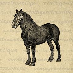 Printable Black Stallion Digital Download Horse Graphic Illustration Image Vintage Clip Art. Digital image download from vintage artwork for printing, fabric transfers, and more. For personal or commercial use. This image is high quality at 8½ x 11 inches large. Transparent background PNG version included.