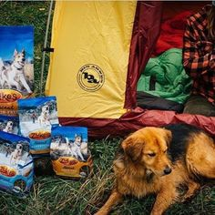 HURRY! Today is YOUR LAST CHANCE TO ENTER to win @zukespets dog food, a Big House 4 tent and a grip of @honeystinger snacks. Here's how to win: 1. Share this post 2. Like this post and tag 2 friends  3. Click the link in our bio to win!