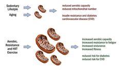 mitochondria 5