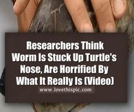 Researchers Think Worm Is Stuck Up Turtle's Nose, Are Horrified By What It Really Is (Video)