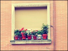 Ventanas con flores