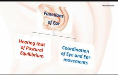 Check out link 👇 for more on human ear Ear Function, Ear Structure, Human Ear, Science Topics, The Creator, Link, Check