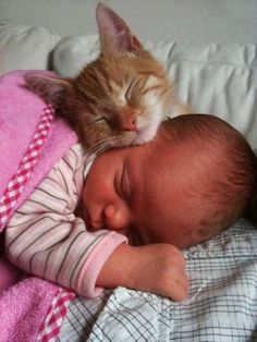 Cat and Baby Sleeping cute animals cat cats baby adorable animal kittens pets… Animals For Kids, Animals And Pets, Baby Animals, Funny Animals, Cute Animals, Funniest Animals, Cute Kittens, Cats And Kittens, Gatos Cats